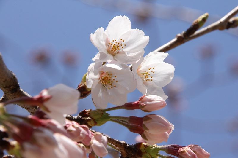 3月25日(水)春休み清掃作業