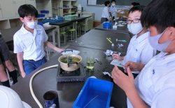 6年 理科実験 part II「光合成」